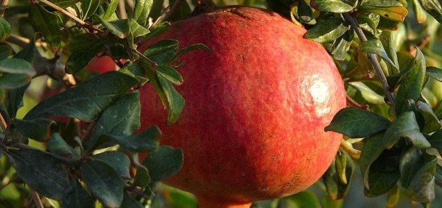 big-pomegranate